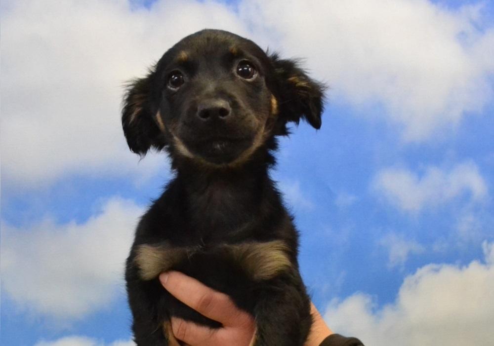 Pies nie powie nam, że jest mu gorąco - Beata Drzymała-Kubiniok, schronisko Fauna