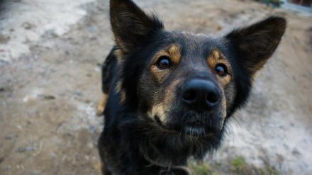 Miasto przeznaczy ponad pół miliona złotych na opiekę nad bezdomnymi zwierzętami