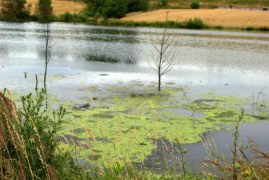 Smród unoszący się nad Potokiem Bielszowickim jest nie do wytrzymania. Jak temu zaradzić?
